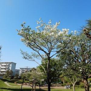 新緑の爽やかな風