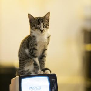 【テレビの影響で〇〇って恐いね】
