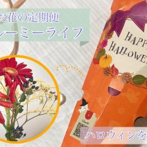 お花の宅配定期便【ブルーミーライフ】お試しでハロウィン感を楽しむ!