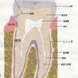 歯科治療は歯の声を聴きながら