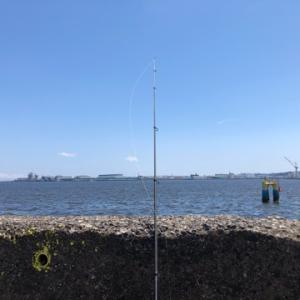そろそろ釣りたいタコ狙い☆彡横浜