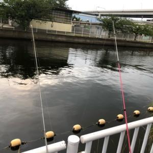 ハゼの飼育始めました………ハゼ釣り☆彡横浜