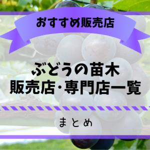 ぶどう農家おすすめの苗木販売店・専門店一覧【まとめ】