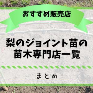 梨のジョイント苗の苗木専門店一覧【まとめ】