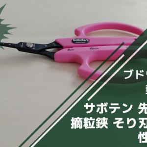 サボテン 先丸ぶどう摘粒鋏 そり刃 B-6Mの性能・使い方・評判を解説【ブドウの摘粒に】