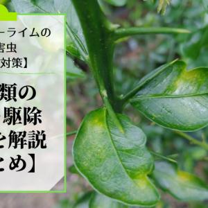 フィンガーライムにつく病害虫のダニ類の防除・農薬・駆除方法を解説【まとめ】