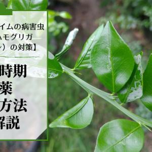 フィンガーライムにつくミカンハモグリガ(エカキムシ)の対策【予防方法・散布時期・農薬の種類を解説】