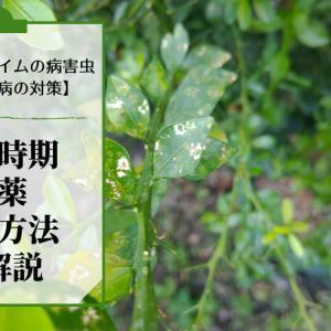 フィンガーライムの『かいよう病』対策【予防方法・散布時期・農薬の種類を解説】