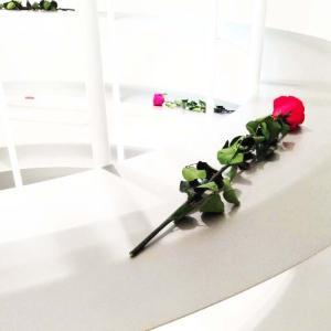 近藤康夫の仕事を紹介する展覧会「デザイン百貨店」へ