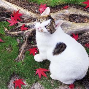 岩合光昭写真展 「ねこの京都、秋」開催