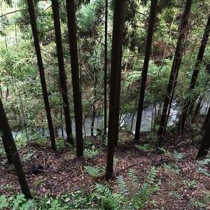京見峠からの鷹峯ラン