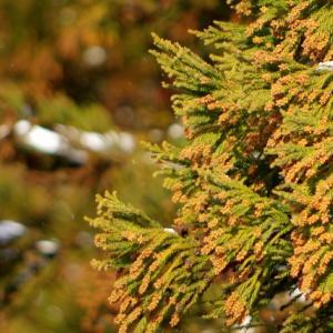 ファブリーズは花粉に効果あり?花粉症で困っている人におすすめのスプレー