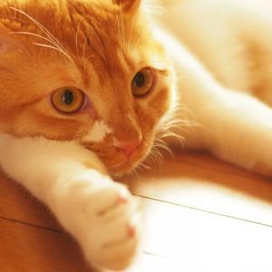 ペットの除菌消臭剤で安心安全に使えるものって何?除菌剤メーカーがお答えします
