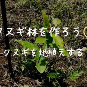 クヌギ林を作ろう① クヌギを地植えする