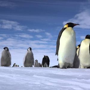 南極と北極 どっちが寒いの⁉ 意外な事実