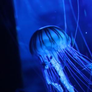 【旅行】インスタ映え間違いなし!東京最先端の水族館、アクアパーク品川にいってきました。青春18きっぷ関東旅行②