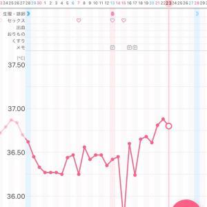 1周期目 d25 高温期6日目  ルイボスミルクティーは最高!