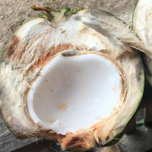 【最新】フィリピン滞在者がおススメするココナッツオイル3選