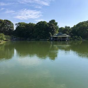 #清澄庭園 は自然豊かだった。#スッポン #亀 #東京見物