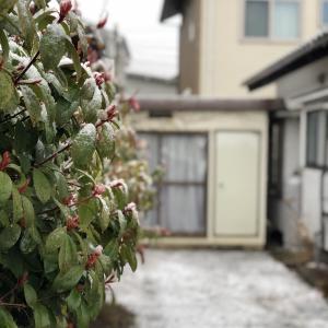 別宅の朝食(2) #おうちごはん #雪 #信州産 #松本市