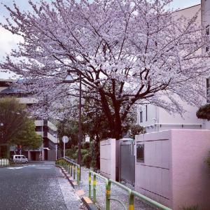 なんとか #東京 の #桜 を観ることができた! #練馬