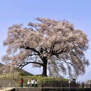 寄り道して #わに塚の桜 を見た。#韮崎市
