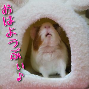 先日のうまうまぷぃ