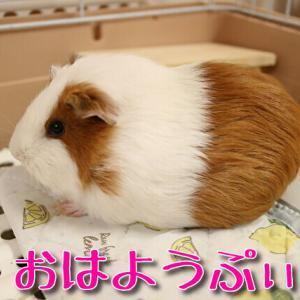 栗祭り365~369ぷぃ