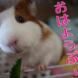 動画ぷぃぷぃ