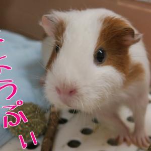 栗祭り373・374ぷぃ