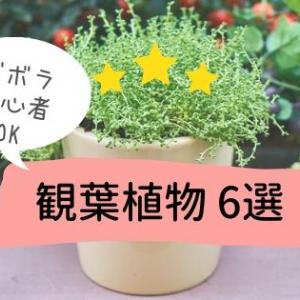ズボラ/初心者でも育てやすい!丈夫でおすすめの観葉植物6選☆