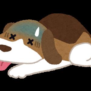 犬・ネコ、夏の熱中症対策【室内編】