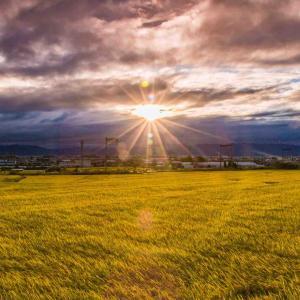 日の出と黄金色の稲穂