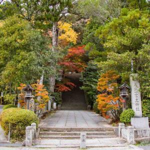 葛城古道を訪ねて 葛城一言主神社の紅葉と乳イチョウ