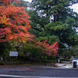 五條市 大澤寺の紅葉