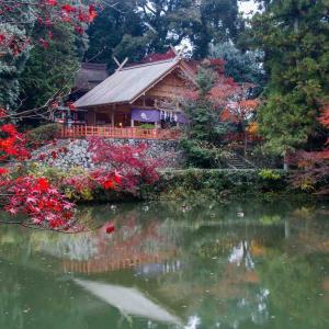 奈良県御所市 高鴨神社の紅葉
