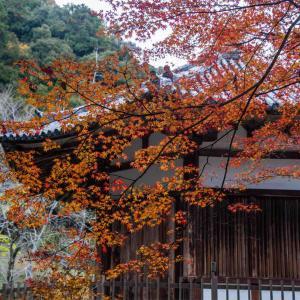 奈良県五條市 栄山寺の紅葉