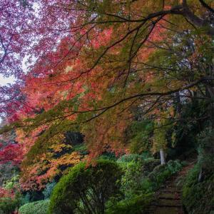 奈良県御所市 九品寺の紅葉