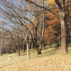 子どもの目に映る秋の景色