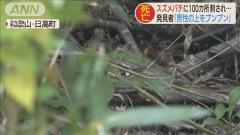 スズメバチに100カ所刺され86歳男性死亡 「畑見に」と山へ 和歌山