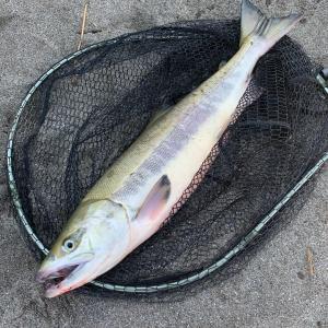 初めてのオホーツク鮭釣り
