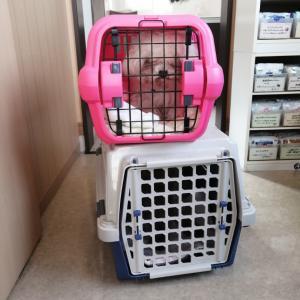 捕獲収容 ネグレクトされていた犬