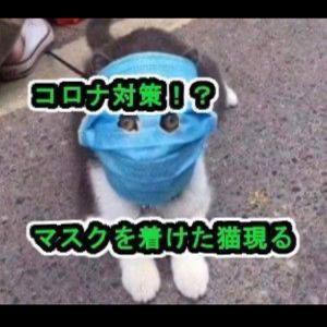 猫のコロナウイルス