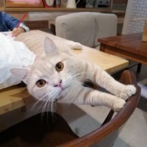 リライフの可愛すぎる保護猫ちゃん達