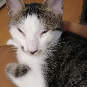 生後4カ月の子猫がもう盛り!?