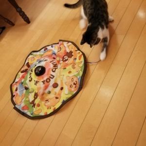 猫ちゃんの遺品のご寄付