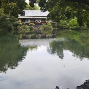 50代 今日のコーデ 9年ぶりの満水 美しい楽寿園