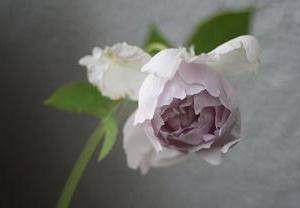 1点アクセントをつけた外出コーデ 美しき薔薇ルシファー
