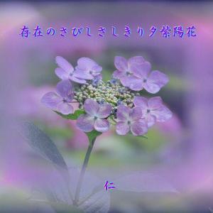 『 存在のさびしさしきり夕紫陽花 』遊行游泳575zhs1303