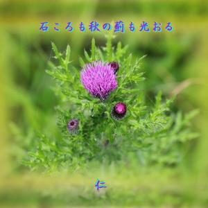 瘋癲老仁妄句42-01『 石ころも秋の薊も光おる 』zsq07
